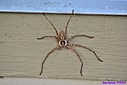 Grass Spider by Marilynne in Critters