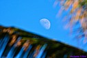 Afternoon Moon by Marilynne in Landscape