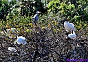 Great Blue Heron Wood Stork by Marilynne in Wildlife