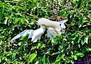 Cattle Egret and babies by Marilynne