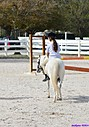 Horses with rider by Marilynne in Transportation