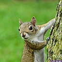 Squirrel by Marilynne in Wildlife