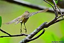 Palm Warbler by Marilynne in Wildlife