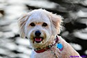 Dog by Marilynne in Pets