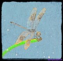 Dragonfly by Marilynne in Critters