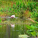 Roseate Spoonbill and Black Necked Stilt by Marilynne