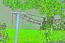 Clothesline by Marilynne in Landscape