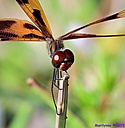 Halloween Pennant by Marilynne in Critters