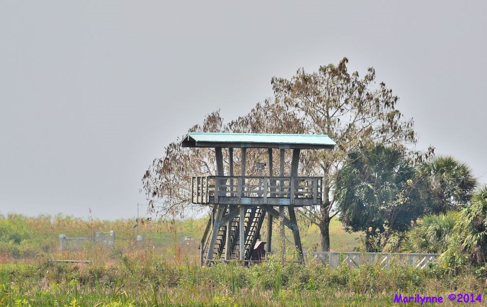 Lookout Tower by Marilynne in Landscape