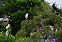 Immature Ibis by Marilynne in Almost