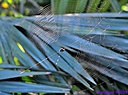 Spider Web by Marilynne in Critters