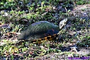 Turtle by Marilynne in Critters