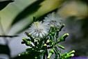 Thistle by Marilynne in Plants