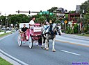Horse and carriage by Marilynne in Landscape