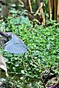 TriColor Heron by Marilynne in Almost