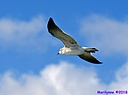 Seagull by Marilynne in Wildlife