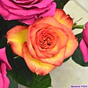Roses by Marilynne in Plants