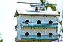 Purple Martin House by Marilynne in Landscape