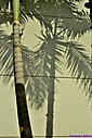 Palm Tree Shadow by Marilynne in Plants