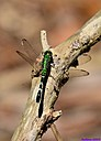 Pondhawk by Marilynne in Critters