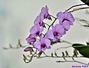 Orchids by Marilynne