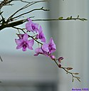 Orchids by Marilynne in Plants