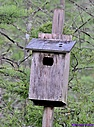Owl Box by Marilynne in Landscape