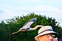 Great Blue Heron by Marilynne in Almost