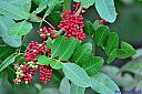 Florida Holly by Marilynne in Plants