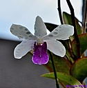 Orchid by Marilynne in Plants