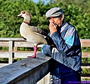Egyptian Goose by Marilynne in Wildlife