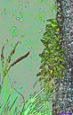 Grass and Fern by Marilynne in Plants