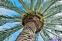 Palm by Marilynne in Plants