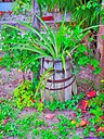 Pineapple Plant by Marilynne