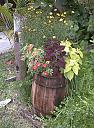 Mixed bag by Marilynne in Plants