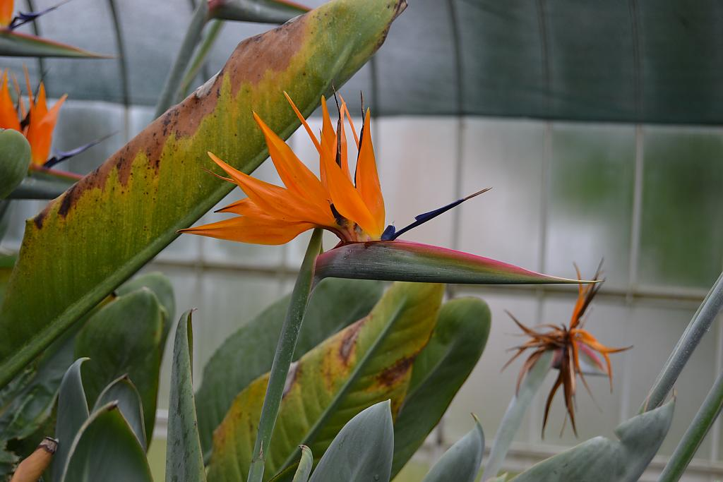 Bird of Paradise by Raymie in Member Albums