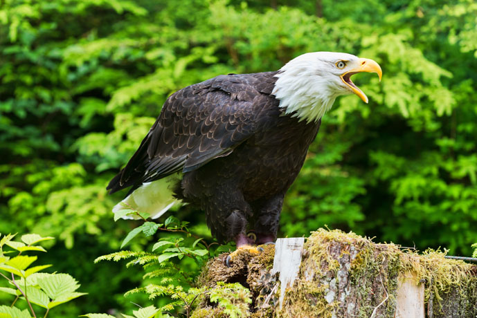 Eagle by Disorderly in Member Albums