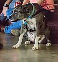 catahoula by lensgrabber in Member Albums
