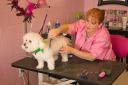 dog-grooming by lensgrabber in Member Albums