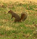 Squirell by lensgrabber in Member Albums