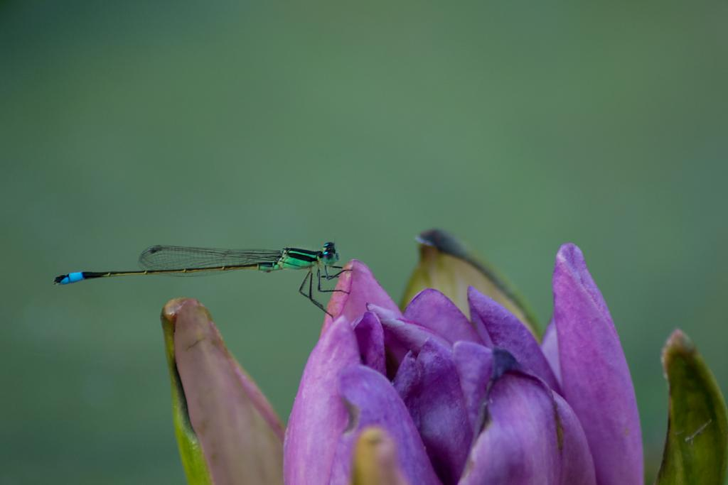 insect by lensgrabber in Member Albums
