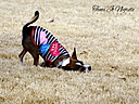 Rolling in the Grass by Tami Jo in Member Albums