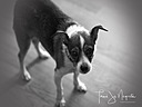 Watchful Tracy by Tami Jo in Member Albums