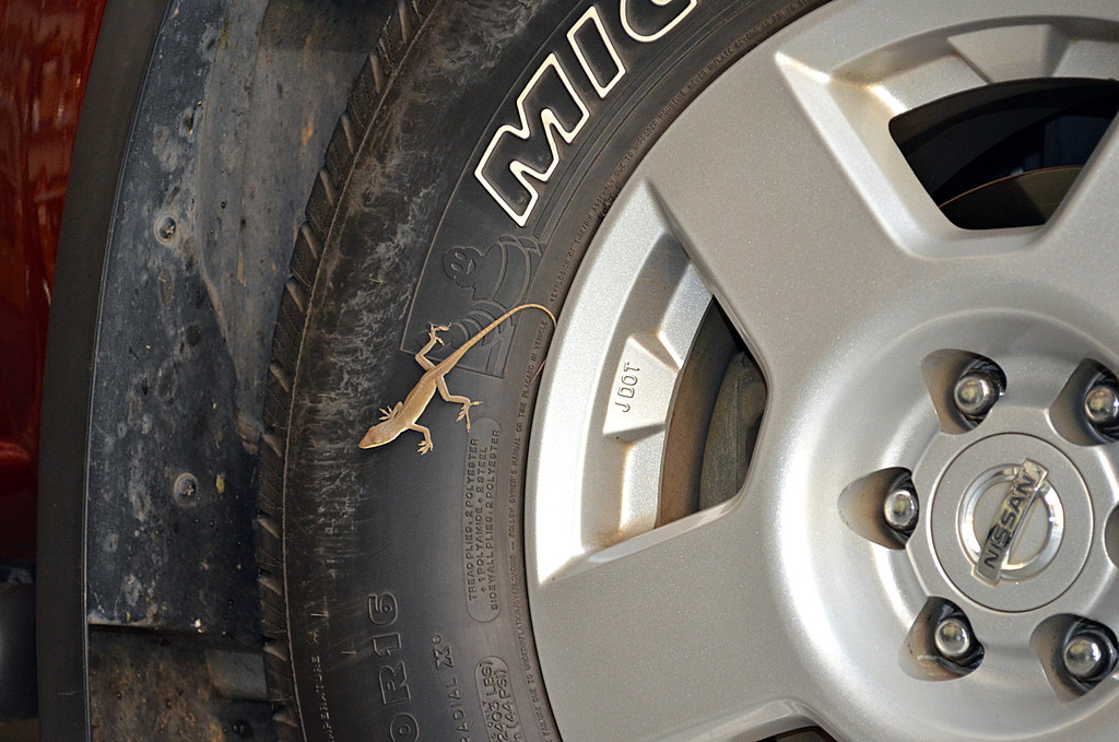 Lizard On Nissan by Sandpatch in Member Albums
