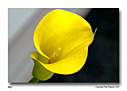 Lilly1 by FredKingston in Member Albums