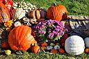 Harvest Color by RockyNH in Member Albums