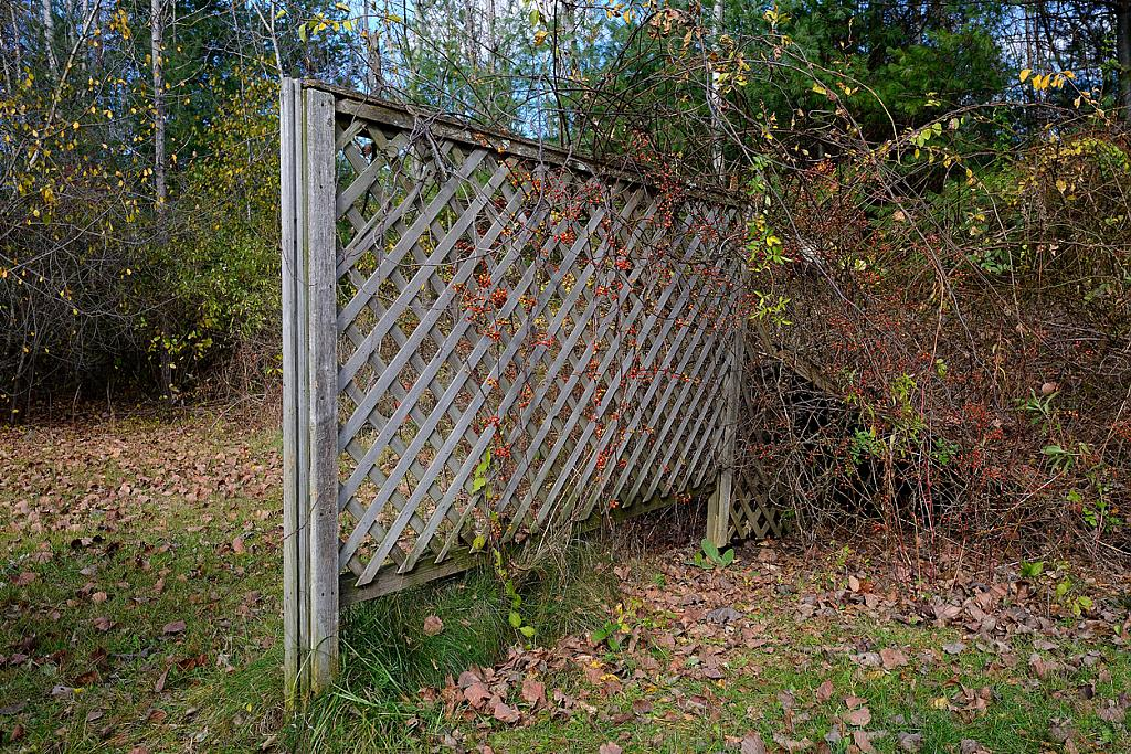 Old Fence by bigal1000 in Member Albums