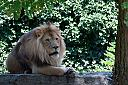 King of Beasts by darlenec59