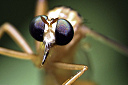 Mosquito by IFSScott in Member Albums