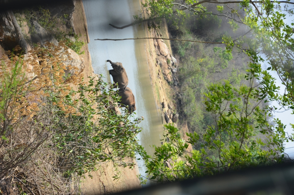 Bannerghatta national park by MSSRIJITH in Member Albums